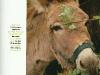 Massif des Vosges magazine - Transhumance des ânes début mai de Deycimont au Hohneck - Refuge du Sotré.