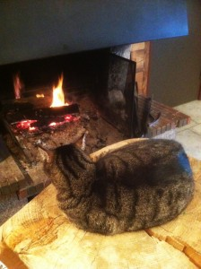 sotre-chat-cheminee-221213
