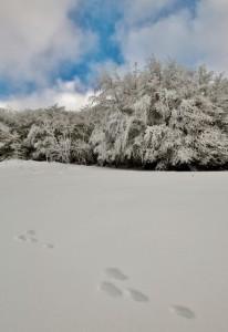 motagne_vosges_hiver_neige_refuge_sotre-18