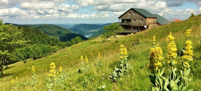 Un cadre de montagne oxygéné, majestueux et panoramique au Refuge du Sotré dans les Vosges !