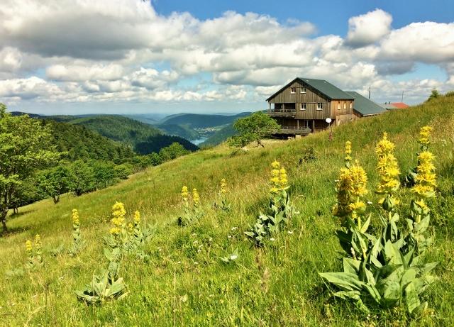 paysages-montagne-vosges-lorraine-refuge-du-sotre-je-vois-la-vie-en-vosges (54)